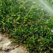 2015 Water Usage